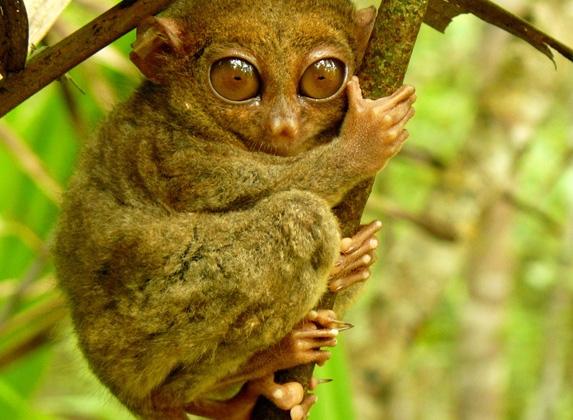 Bilinmeyen Dünyanın En İlginç 10 Hayvanı